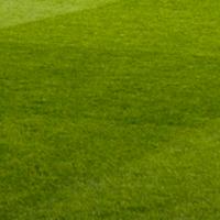 achtergrond-gras